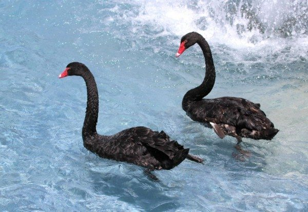 Alzheimer's Disease and Obesity - The Black Swan